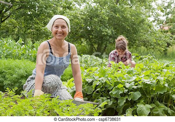 women working in  vegetable garden - csp6738631