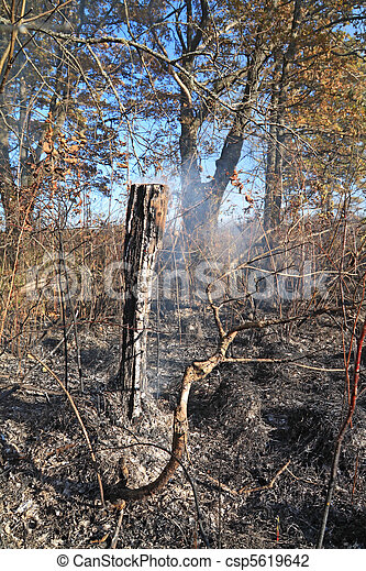 wood after fire - csp5619642