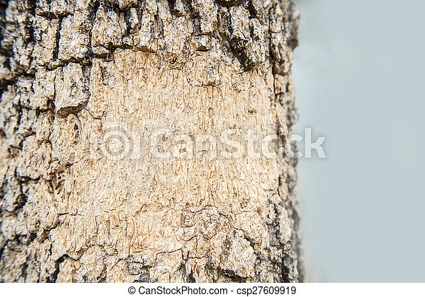 Wood background - csp27609919