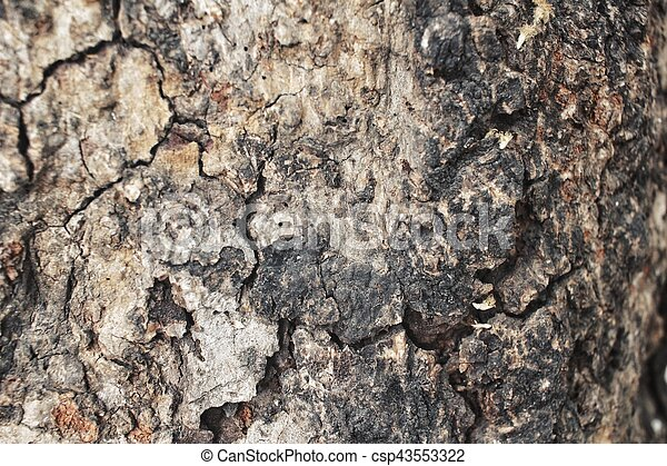 Wood background - csp43553322
