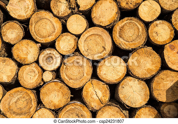 wood background - csp24231807