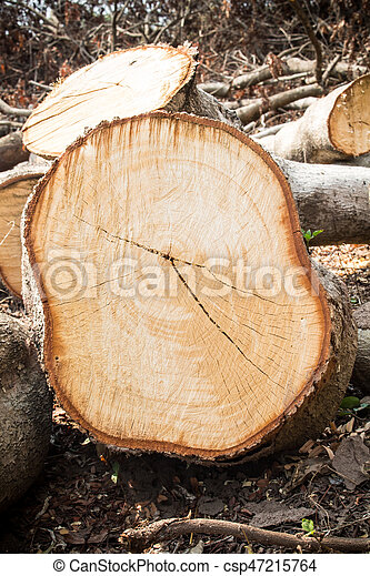wood cutted - csp47215764