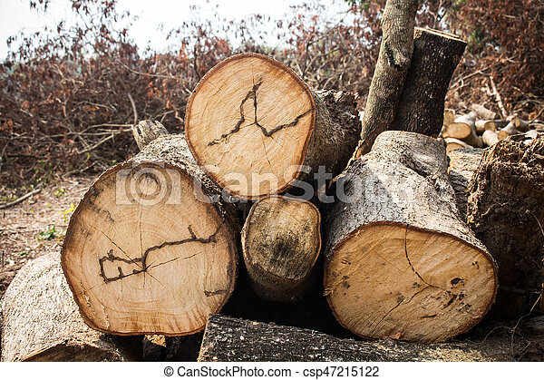wood cutted - csp47215122