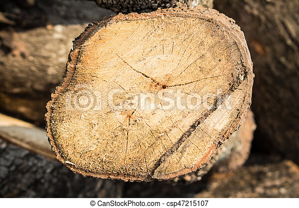 wood cutted - csp47215107