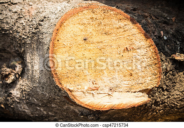 wood cutted - csp47215734