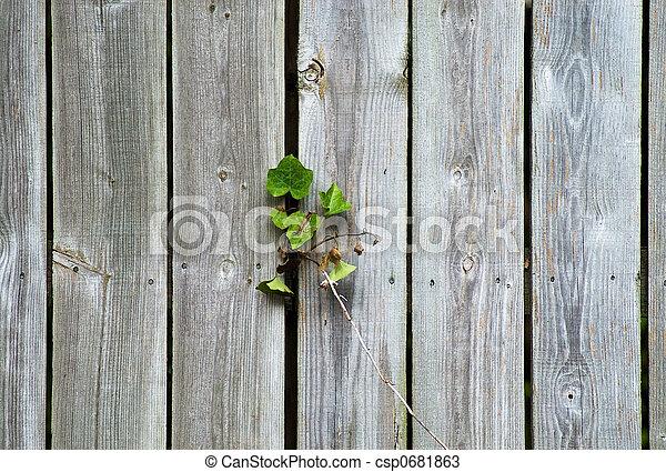 Wood Fence - csp0681863