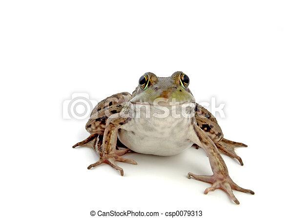 Wood Frog 2 - csp0079313