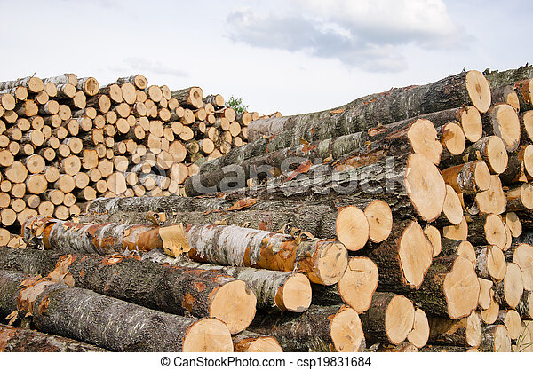 wood fuel birch and pine logs stacks near forest - csp19831684