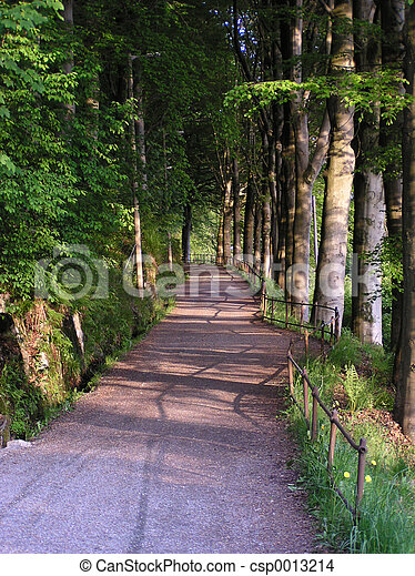 Wood Path (Norway) - csp0013214