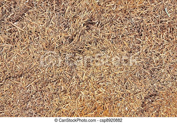 Wood shavings - csp8920882