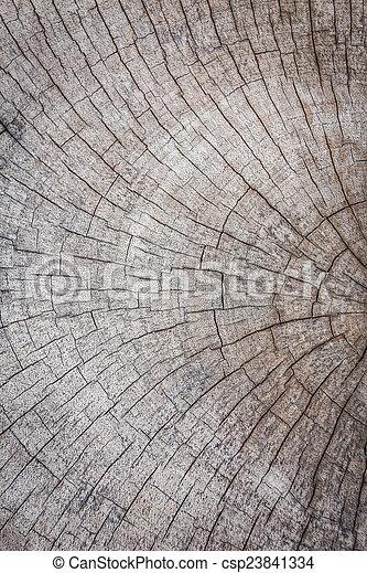 Wood texture background - csp23841334