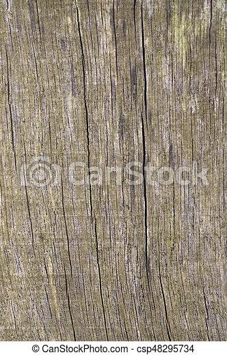 Wood texture - csp48295734