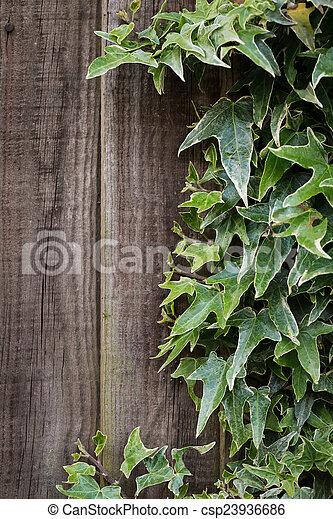 Wooden background - csp23936686