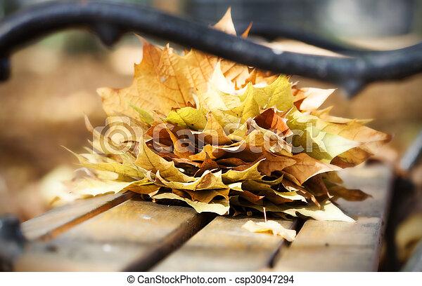 Wooden bench in autumn park - csp30947294