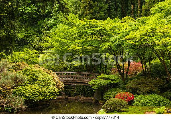 Wooden bridge in a Japanese garden - csp37777814