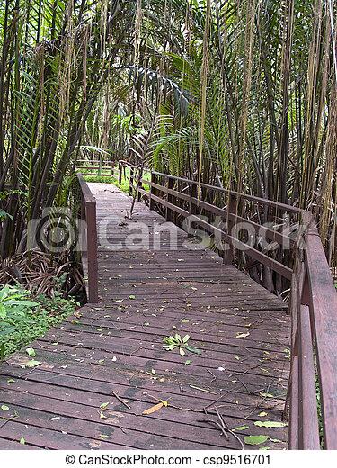 Wooden bridge - csp9516701