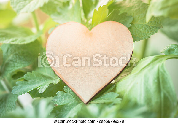 Wooden heart label with various herbs. - csp56799379