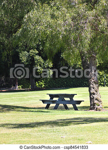 Wooden picnic table under a tree in a park - csp84541833
