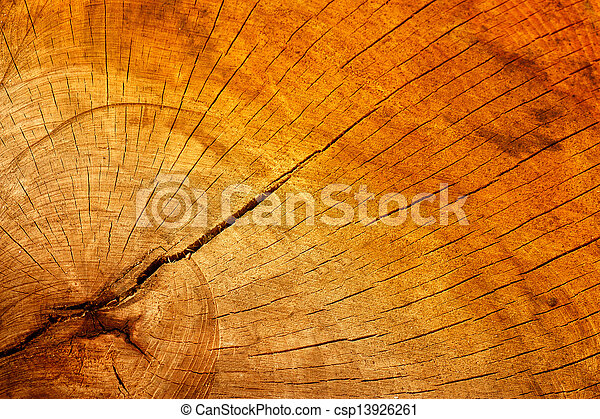 Wooden texture of a cracked tree trunk - csp13926261