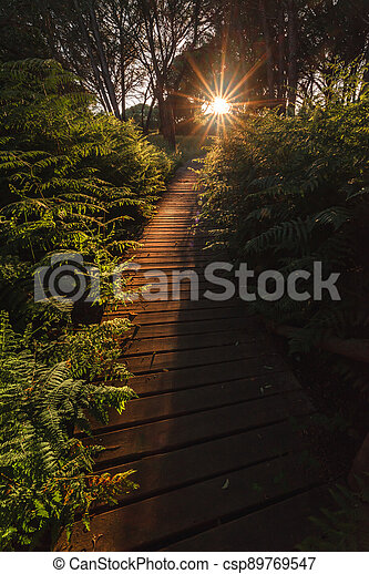 Wooden trail to the sunset among ferns - csp89769547