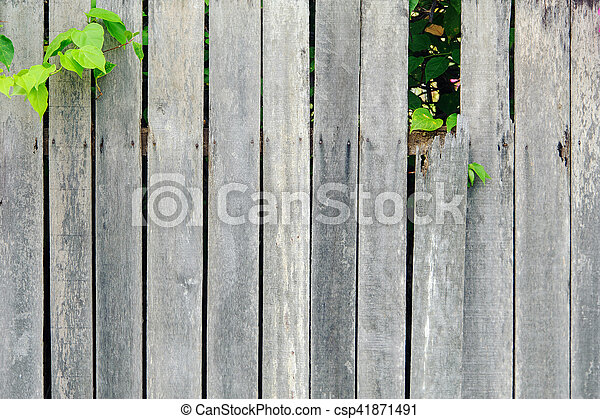 wooden wall fence with flower - csp41871491