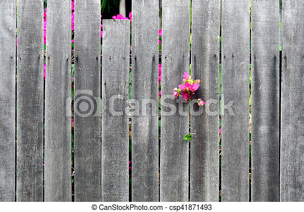 wooden wall fence with flower - csp41871493