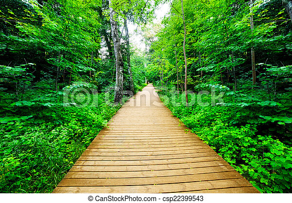 wooden way in green forest lush bush peaceful nature theme