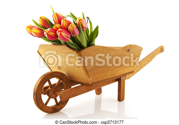 wooden wheelbarrow with flowers - csp3713177