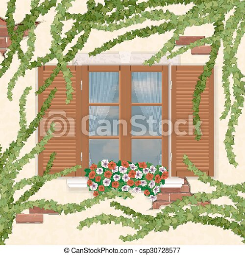 Wooden window with shutters, overgrown ivy. - csp30728577