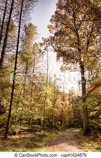 Woodland scene with yellow and brown autumn leaves HDR Filter. - csp41624879