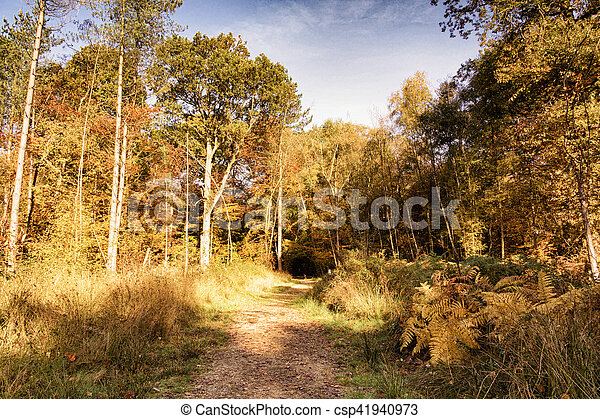 Woodland scene with yellow and brown autumn leaves HDR Filter. - csp41940973