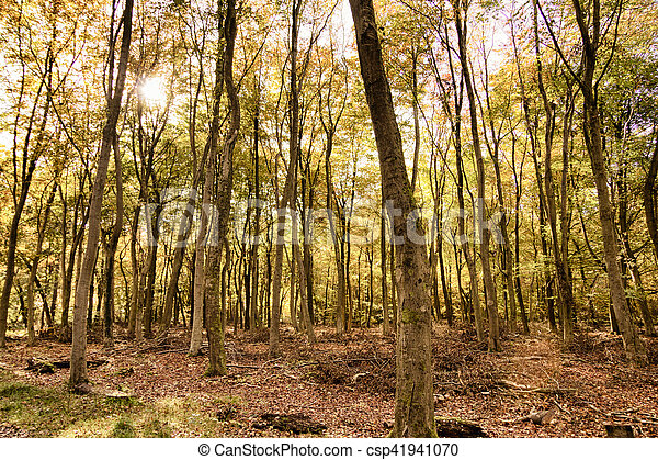 Woodland scene with yellow and brown autumn leaves HDR Filter. - csp41941070