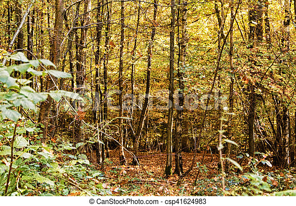 Woodland scene with yellow and brown autumn leaves HDR Filter. - csp41624983