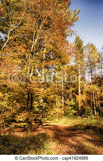 Woodland scene with yellow and brown autumn leaves HDR Filter. - csp41624986