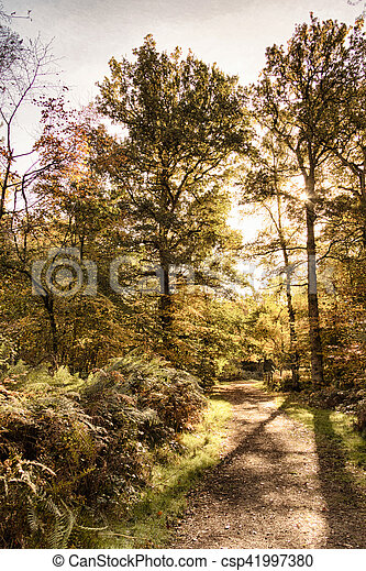 Woodland scene with yellow and brown autumn leaves HDR Filter. - csp41997380