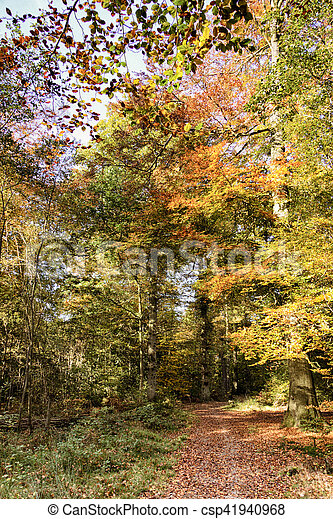 Woodland scene with yellow and brown autumn leaves HDR Filter. - csp41940968