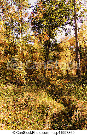 Woodland scene with yellow and brown autumn leaves HDR Filter. - csp41997369