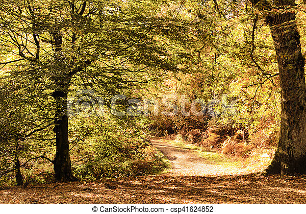 Woodland scene with yellow and brown autumn leaves HDR Filter. - csp41624852