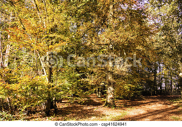 Woodland scene with yellow and brown autumn leaves HDR Filter. - csp41624941