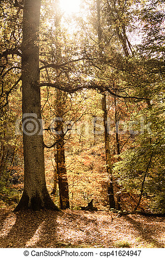 Woodland scene with yellow and brown autumn leaves HDR Filter. - csp41624947
