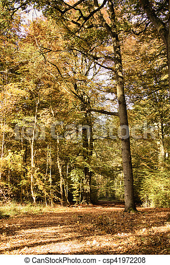Woodland scene with yellow and brown autumn leaves HDR Filter. - csp41972208