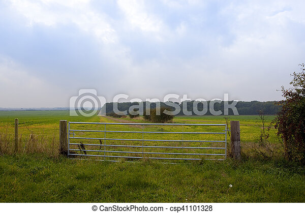 woodland with metal gate - csp41101328