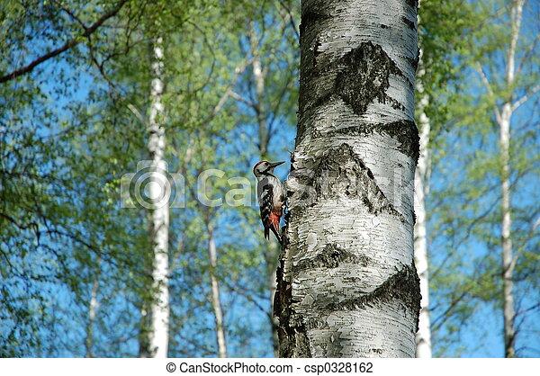 Woodpecker 1 - csp0328162