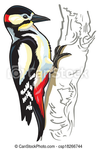 woodpecker great spotted woodpecker side view picture eps rh canstockphoto co uk woodpecker clipart free pileated woodpecker clipart