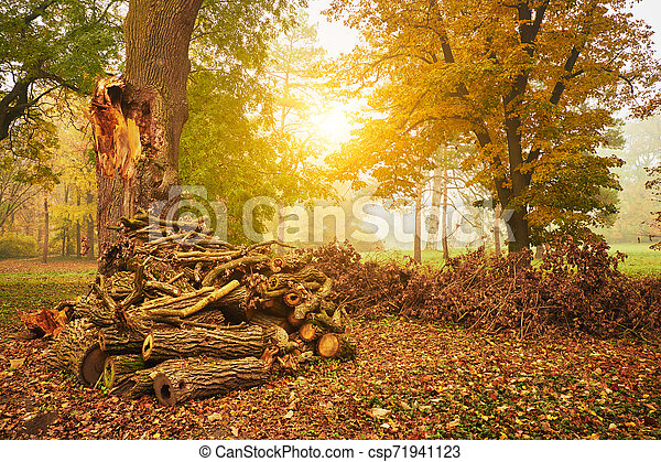 Woodstack on the park - csp71941123