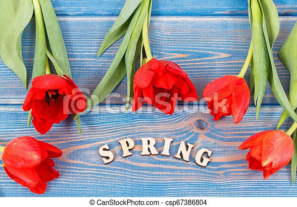 Word spring with fresh tulips on blue boards - csp67386804