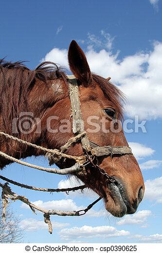 Workhorse - csp0390625