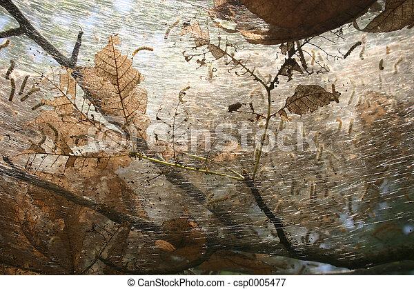 Worm's nest - csp0005477