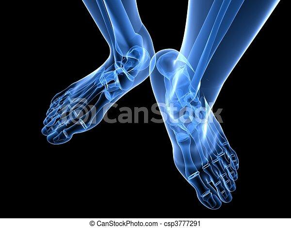 x-ray foot illustration  - csp3777291