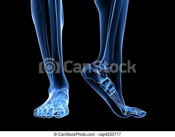 x-ray foot illustration  - csp4233717